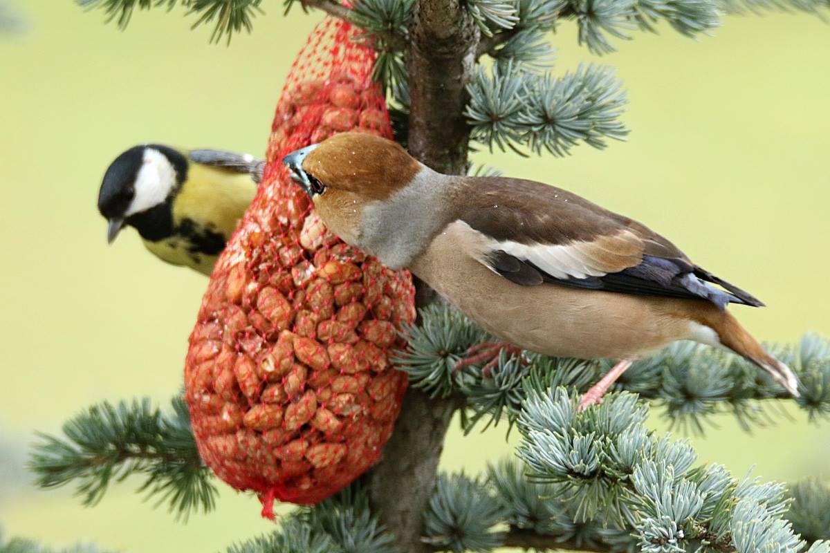 Zašto nema ptica na hranilicama?