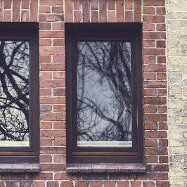 Zašto ptice napadaju prozore i kako ih u tome spriječiti?