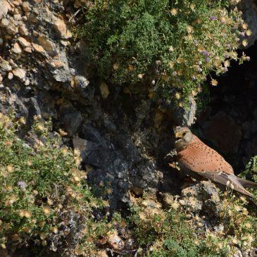 Hrvatska potpisala memorandum koji će omogućiti veću razinu zaštite ptica grabljivica