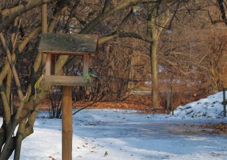 Promatranje ptica u parku Maksimir, subota 28.1.2017.