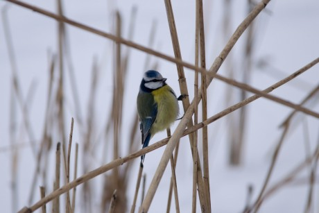 Promatranje ptica na Bundeku, subota 18.2.2017.