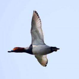 O pticama selicama i opasnostima na putu