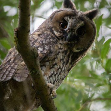 BirdID – Trening prepoznavanja ptica 2018.
