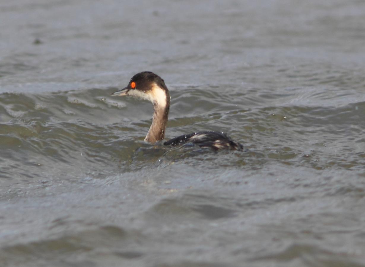 Predavanje: Vrste od interesa za zimsko prebrojavanje ptica, petak 11.12.2015.