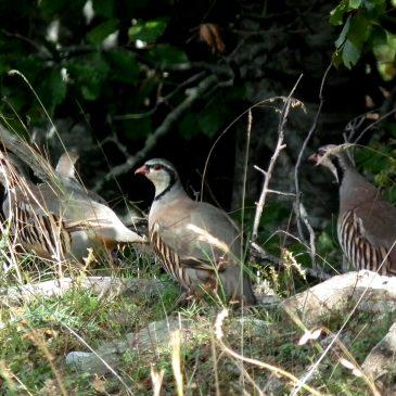 Uključite se u Trening prepoznavanja ptica na Neretvi