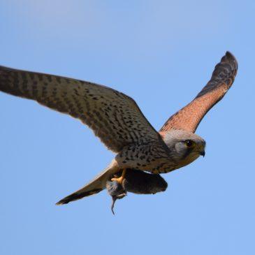 BirdID – Trening prepoznavanja ptica 2017.