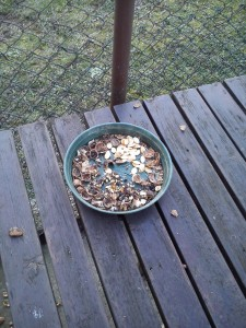 mješavina sjemenki u hranilici