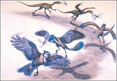 Predavanje koje slijedi: Evolucija ptica