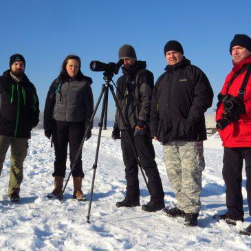 Prebrojavanje ptica močvarica na zimovalištima u Međimurju i okolici