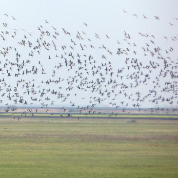 Zimsko prebrojavanje ptica 2016