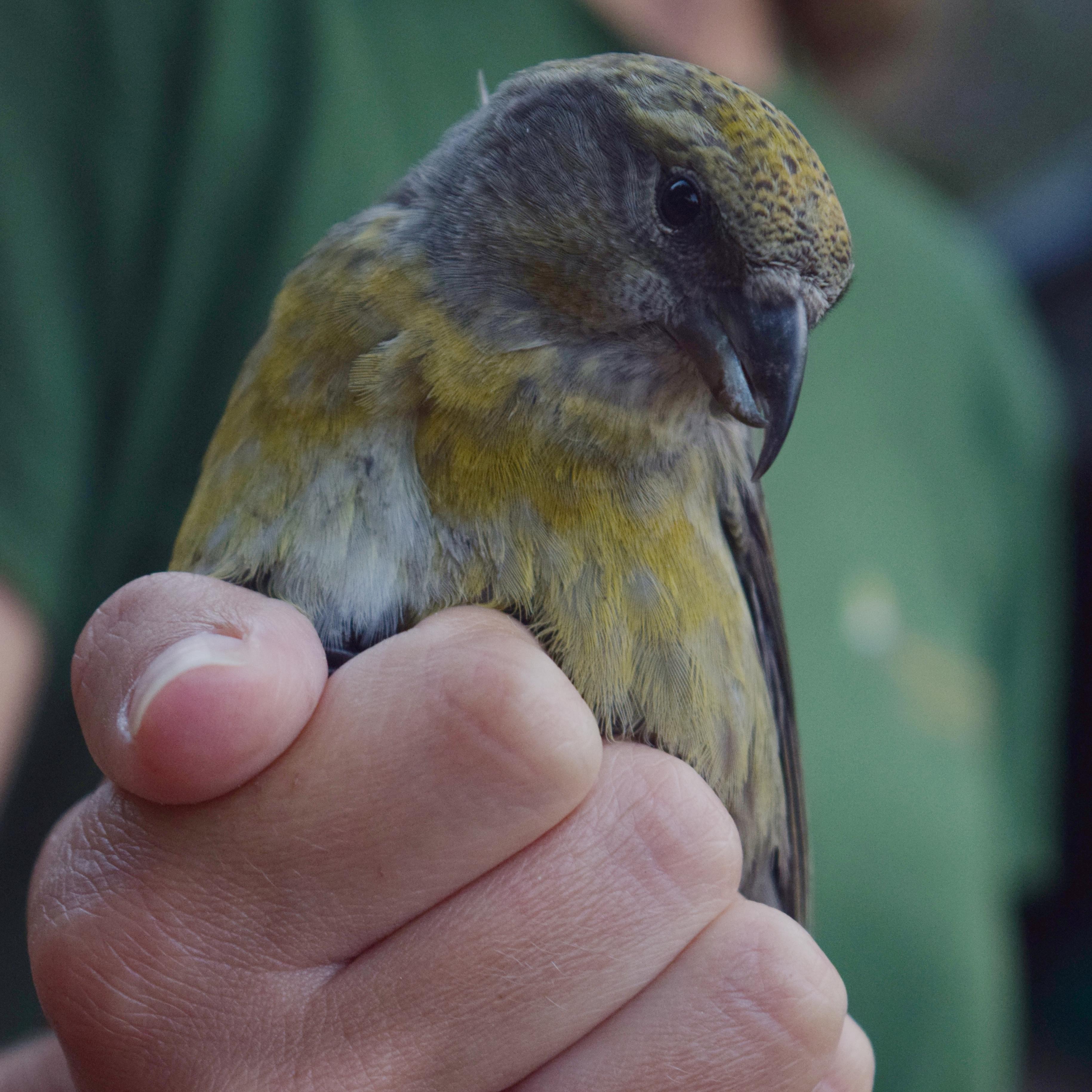 Izvještaj s Ornitološkog kampa Učka 2016.