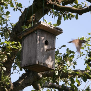 Uloga ptica u integriranoj proizvodnji voća