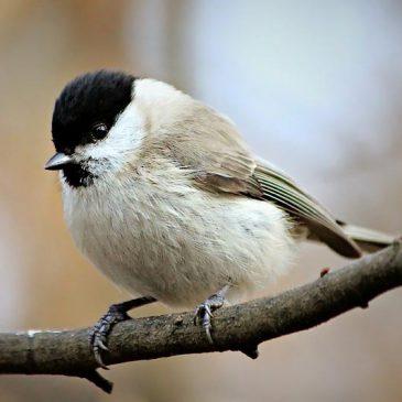 Kako ptice preživljavaju zimu?