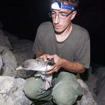Life Artina – mreža za zaštitu ptica na Jadranu