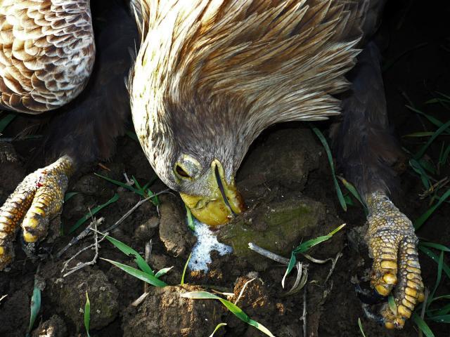 Uginule životinje u Apatinu