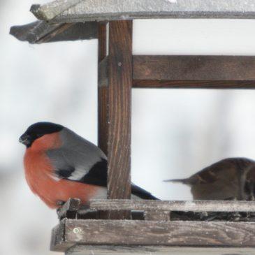 Poziv volonterima za sudjelovanje u zimskom hranjenju ptica – Index ljubimci