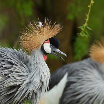 Nove volijere za afričke ptice u zagrebačkom ZOO-u