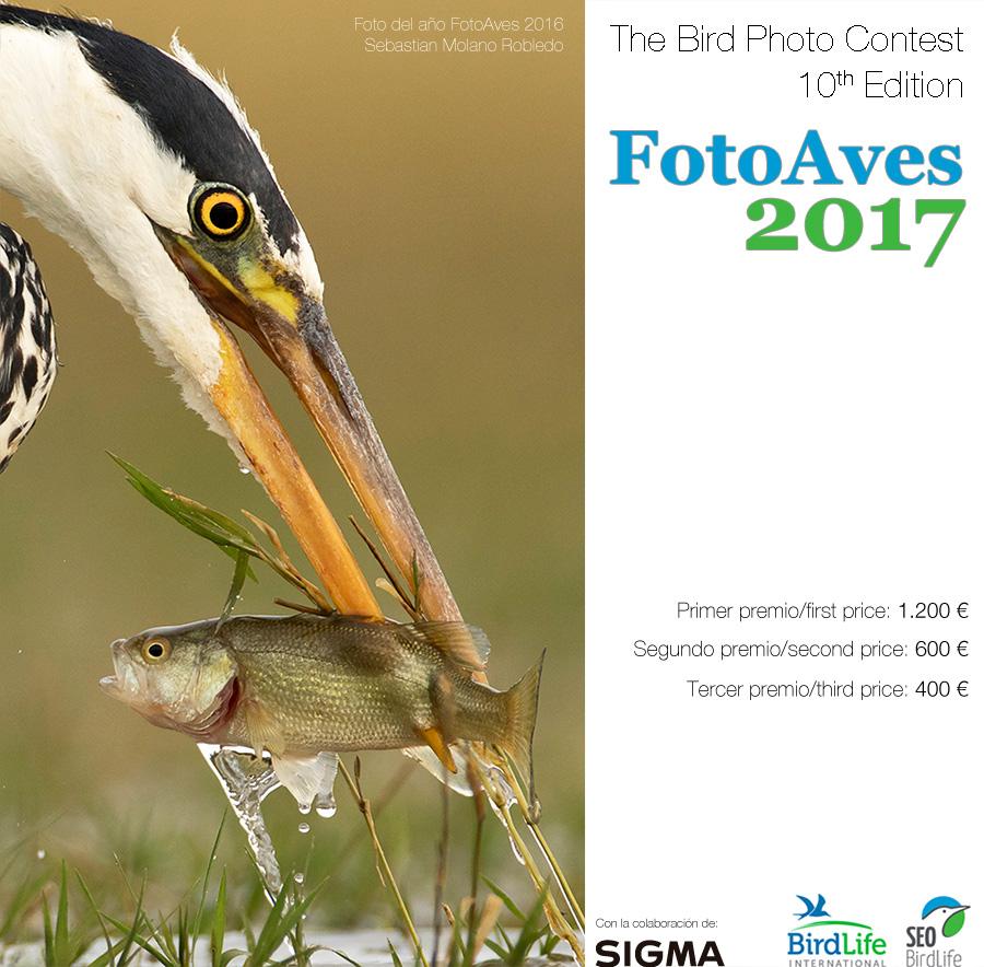 """Otvoren """"FotoAves"""" – natječaj za fotografe ptica"""