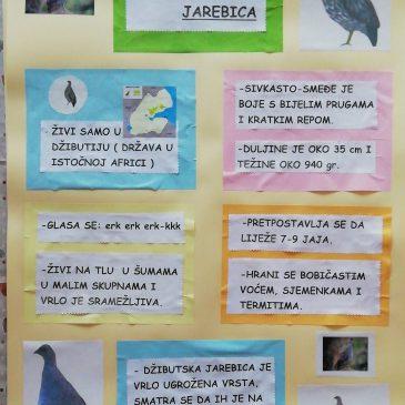Džibutska jarebica