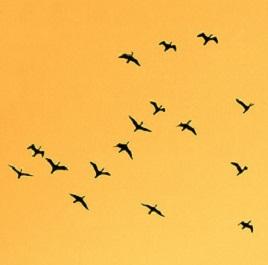 Ptice u migraciji