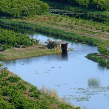 Ilegalno ubijanje ptica – Delta Neretve