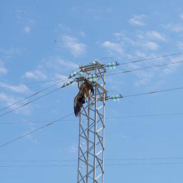 Ptice i dalekovodi – dio drugi