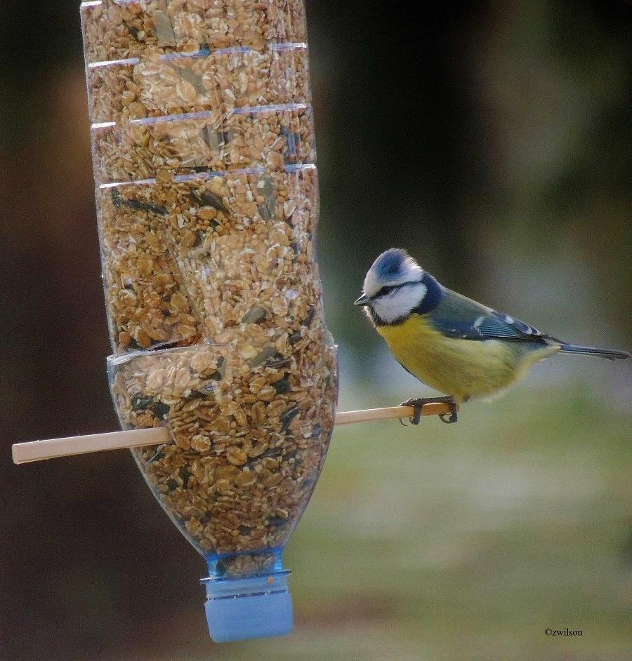 Hranjenje ptica zimi