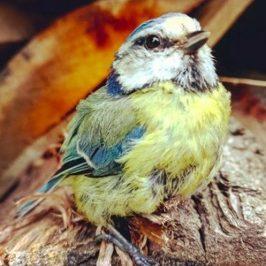Ptičica se zapetljala u dlake i sletjela ženi na dlan u potrazi za pomoći