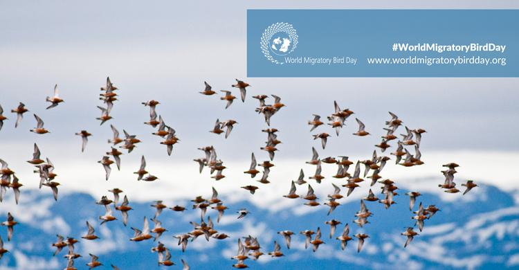 Svjetski dan ptica selica: Zdrav planet za ptice selice i ljude