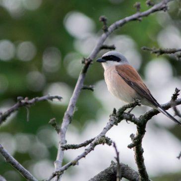 Koja je veza između ptica i poljoprivrede?