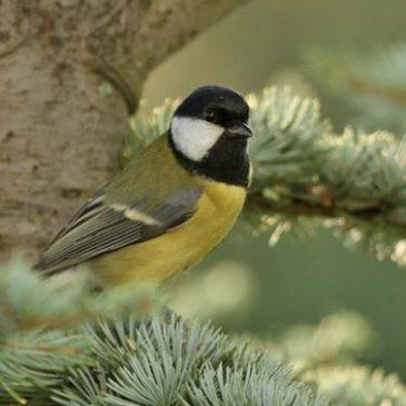Trening prepoznavanja čestih vrsta ptica | Udruga BIOM