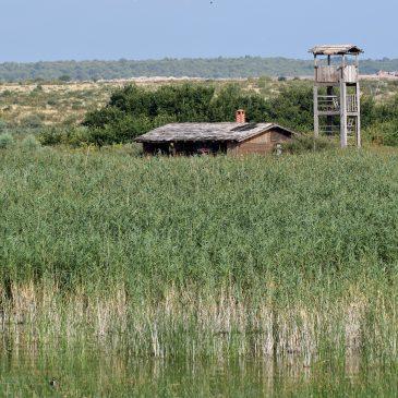 Prstenovanje na Vranskom jezeru – info hrvatske prstenovačke centrale