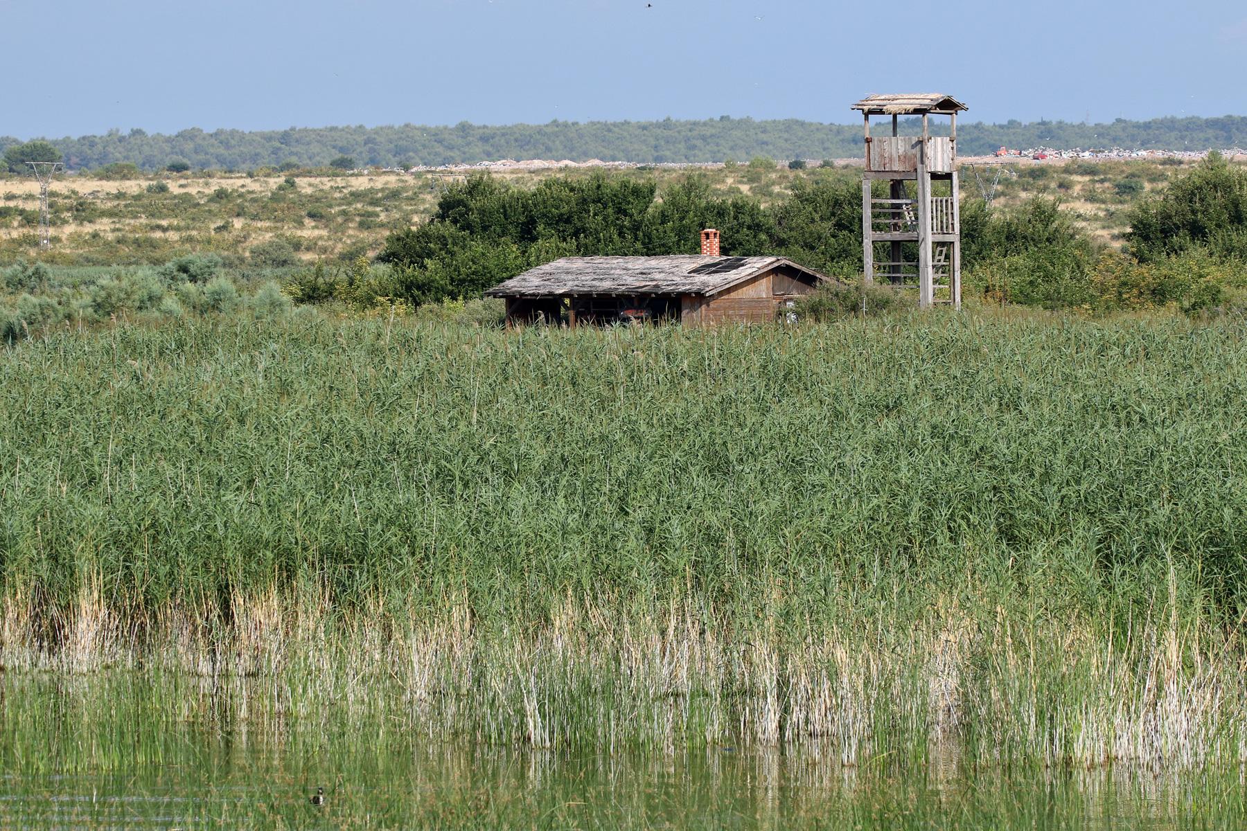 Gori zaštićeno stanište ptica u parku prirode Vransko jezero